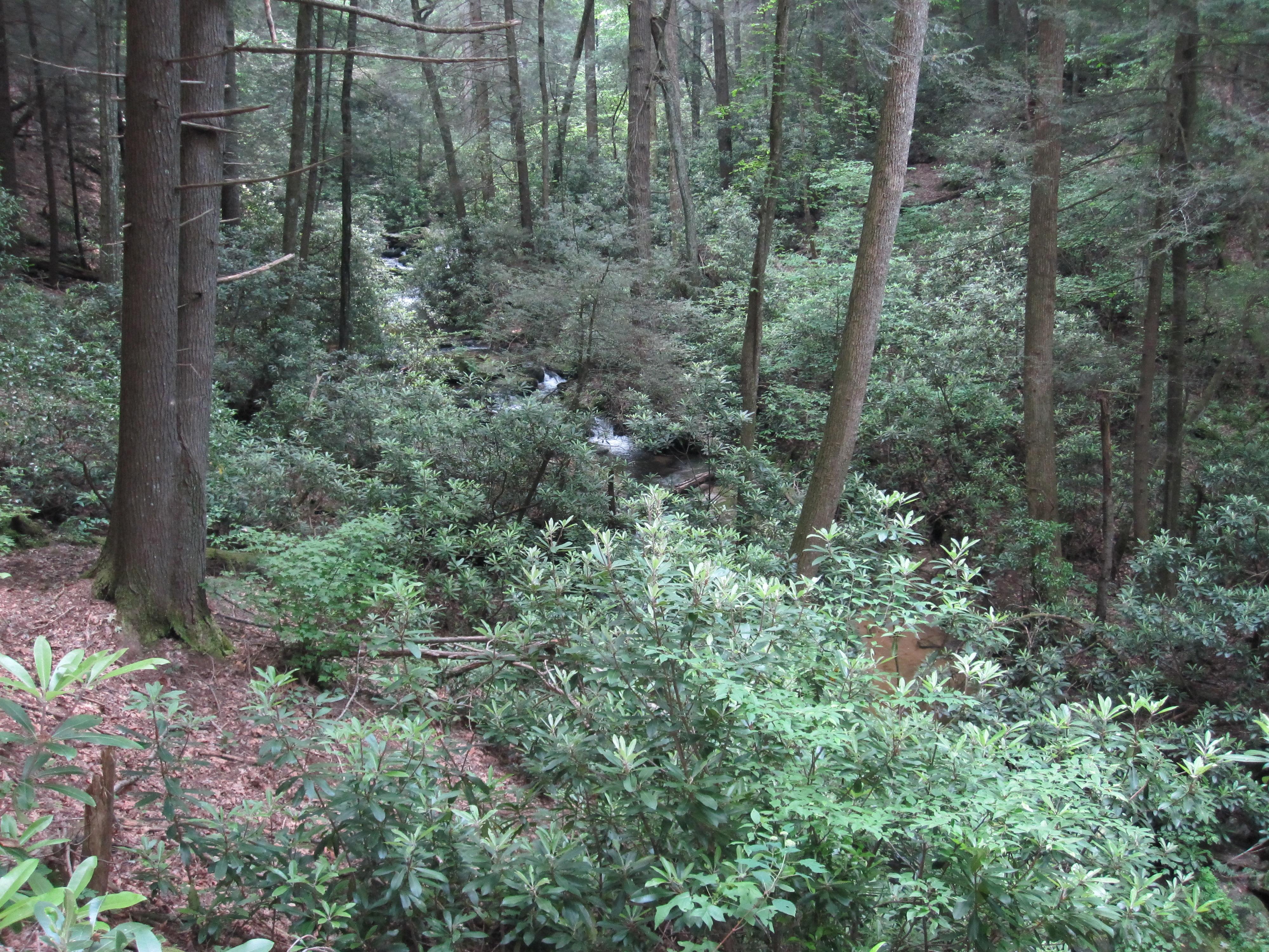 Little Rock Creek