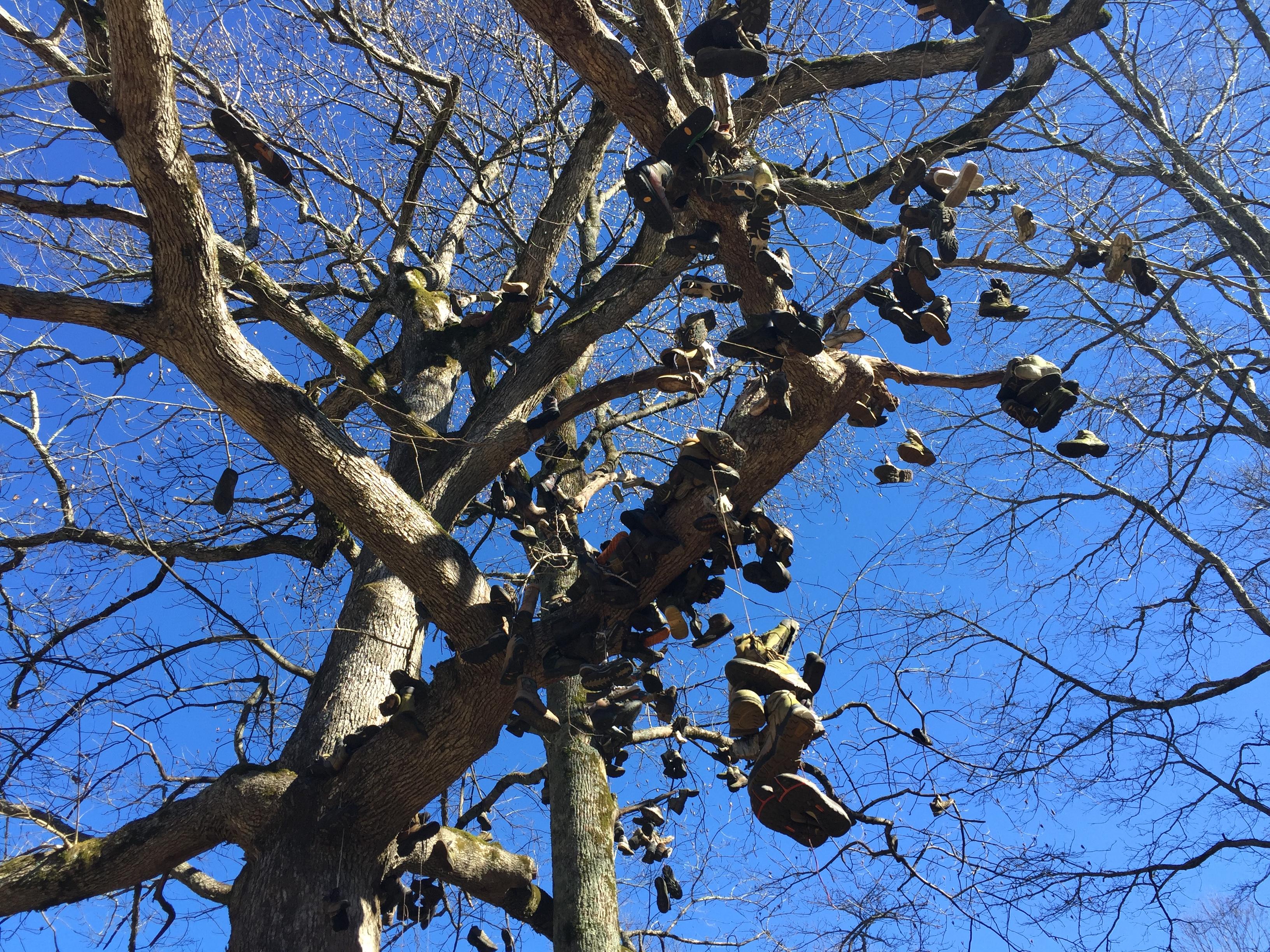 Walasi-Yi Shoe Tree