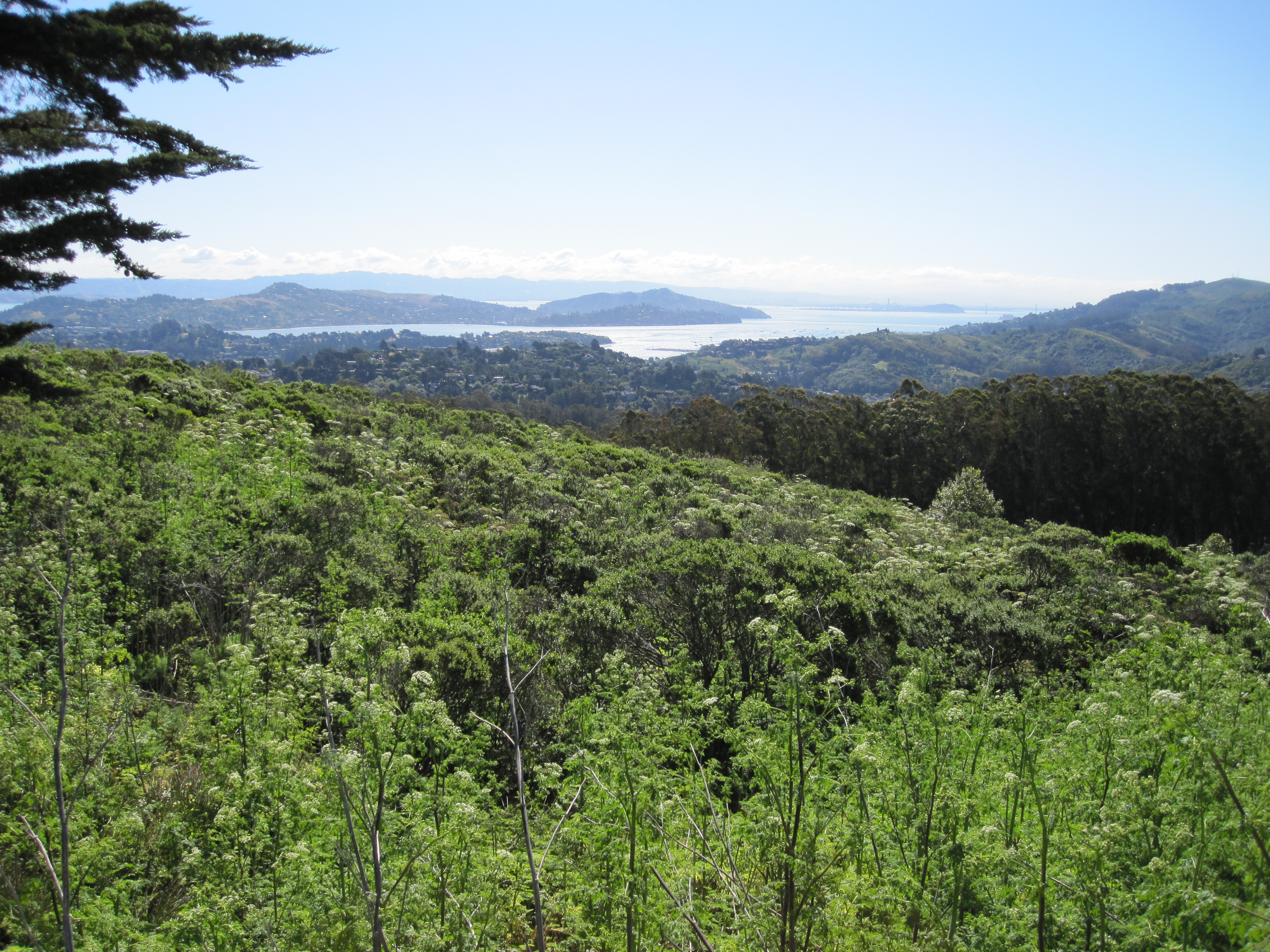 San Francisco Bay from Muir Woods