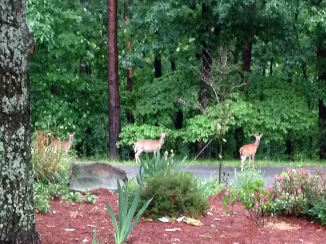Deer across the street