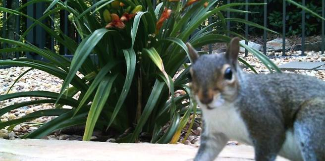 Our photo-bombing squirrel