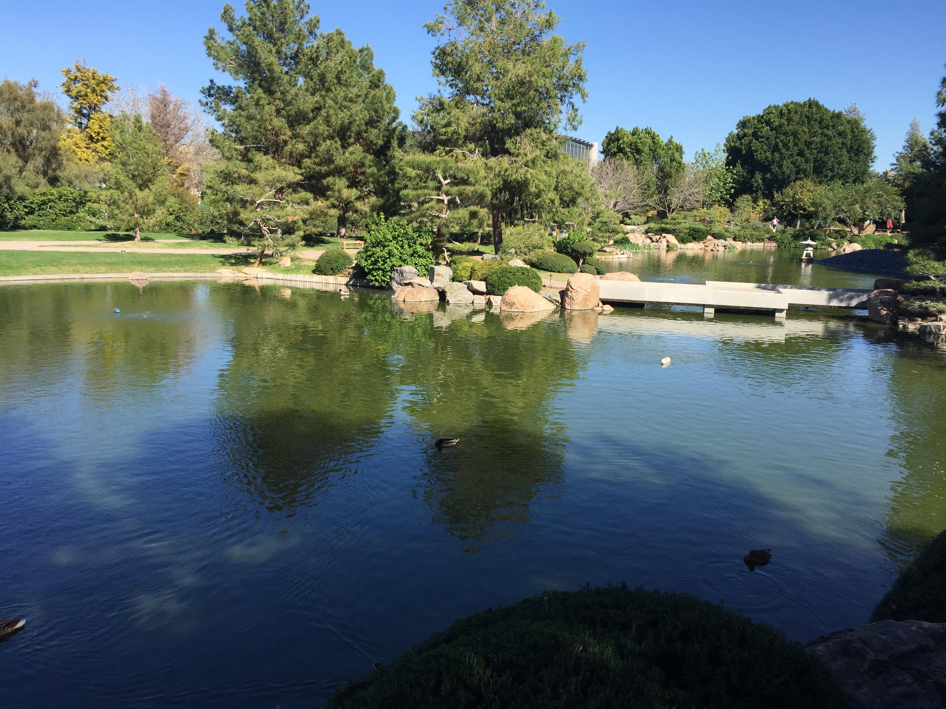 Pond at Japanese Friendship Garden in Phoenix, AZ