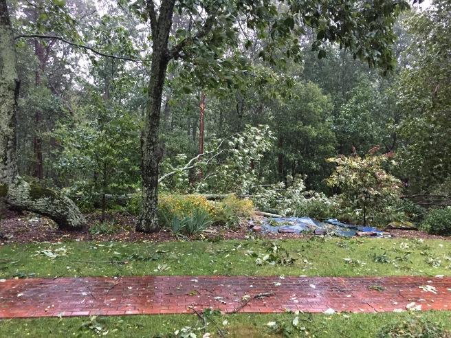 First trees fallen