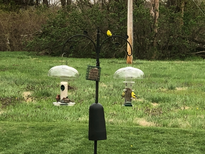 Finches feasting